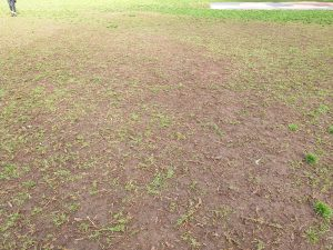 Poor Page Park Turf